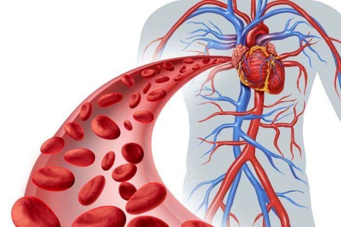 Mạch máu dẫn máu đến tim là mạch gì