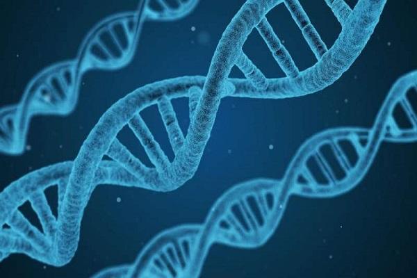 Ở người có bao nhiêu cặp nhiễm sắc thể